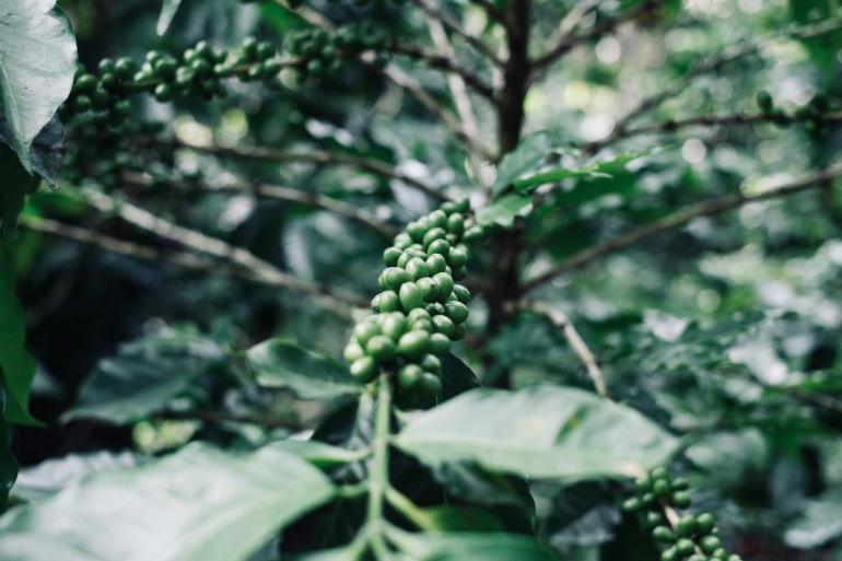 DSCF5493